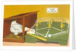 Baseball Playing Chicken by Corbis