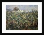 Banana Plantation by Pierre-Auguste Renoir