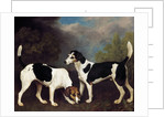 A Couple of Foxhounds by George Stubbs