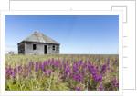 Abandoned Hudson Bay Company Trading Post, Canada by Corbis