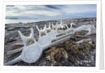 Whale Bones, Nunavut, Canada by Corbis