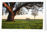 A grand oak tree overhangs a lone bench at sunset. by Corbis