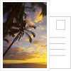 Sunset with palm trees in Kihei, Maui, Hawaii by Corbis