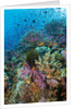 Abundance of marine life on a coral reef. by Corbis