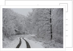 Asphalt road crossing a forest covered with frost in Hungary by Corbis