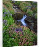 Elk Creek and wildflowers by Corbis