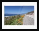 California Poppies Along Highway 1 by Corbis