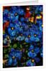 Flowers by Corbis
