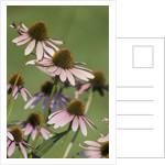 Flower Garden by Corbis