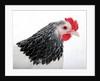 Sussex Hen by Corbis