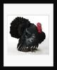 Black Turkey by Corbis