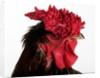 Derbyshire Redcap by Corbis