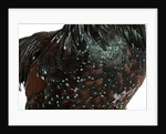 Speckled Plumage by Corbis
