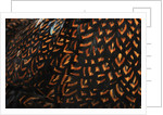 Doubled Laced feather pattern by Corbis