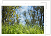Grass and dew by Corbis