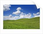 Barley field and cumulonimbus clouds by Corbis