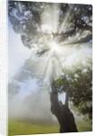 Laurel forest Laurisilva in fog by Corbis