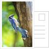 Blue Jay by Corbis
