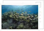 Fish on Coral Reef. by Corbis