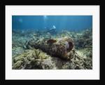 Diver peruses 10,000 pound Cannon. by Corbis