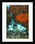 Technical diver on coral reef. by Corbis