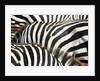Kenya, Amboseli National Park, close up on zebra stripes by Corbis