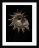 Astraea heliotropium by Corbis