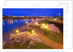 night image of cherry blossoms and water front park, Willamette River, Portland Oregon by Corbis