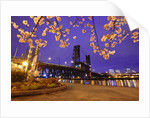 cherry blossoms and water front park, Steel ridge, Willamette River, Portland Oregon by Corbis