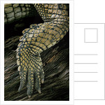 Gavialis gangeticus (gharial) - hindleg by Corbis