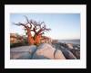 Baobab Tree at Dawn, Kubu Island, Botswana by Corbis