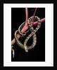 Elaphe taeniura friesi (beauty snake) by Corbis