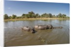 Aerial View of Hippo Pond, Moremi Game Reserve, Botswana by Corbis