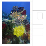 Coral reef with Feather Stars by Corbis