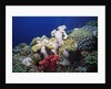 Reef scene with Brain and Leather Corals by Corbis