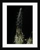 Phyllostachys pubescens (Moso bamboo) - shoot by Corbis