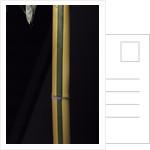 Phyllostachys viridis 'Sulfurea' (bamboo) by Corbis