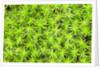 The arrival of spring shine the green of undergrowth, Alpi Carniche , Friuli-Venezia Giulia, Carni by Corbis