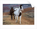 Horses at Full Gallop by Corbis