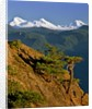 Three Sisters Mountains by Corbis