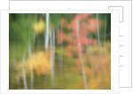 A reflection of a panned motion blur of autumn woodland. by Corbis