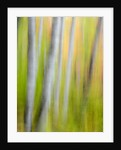 A panned motion blur of autumn woodland. by Corbis