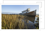 Point Reyes Shipwreck, Inverness, California by Corbis