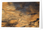 The desert near the Dead Sea. by Corbis