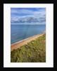 Pinewood along the coast by Corbis
