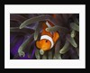 clown fish and blue anemonie by Corbis