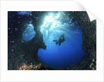 scuba diver swimming through an arch by Corbis