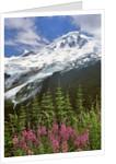 Fireweed flowers below Mt. Baker by Corbis