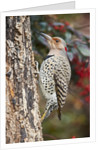 Flicker by Corbis