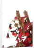 bonsai leaves by Corbis